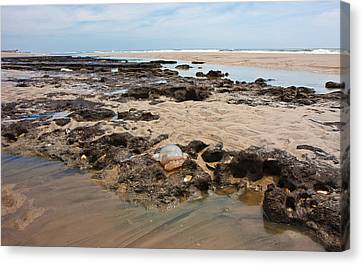Topsail Sponge-land Canvas Print by Betsy Knapp