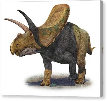 Torosaurus Latus, A Prehistoric Era Canvas Print by Sergey Krasovskiy