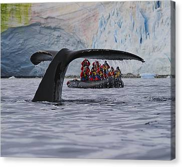 Total Fluke Canvas Print