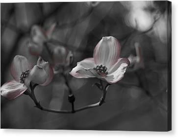 Touch Of Color Canvas Print by Colleen Coccia