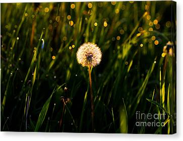 Canvas Print featuring the photograph Touch Of Nature by Everett Houser