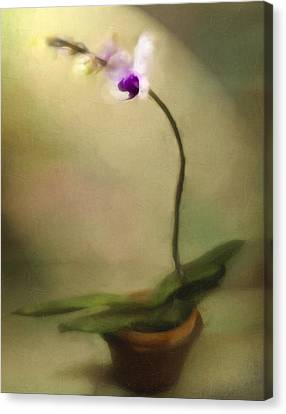 Toward The Light Canvas Print by Jill Balsam