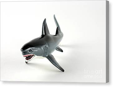 Toy Shark Canvas Print by Photo Researchers, Inc.