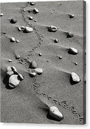 Tracks And Rocks Canvas Print by Brady D Hebert