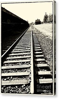 Tracks Of Our Ancestors Canvas Print by Leslie Leda