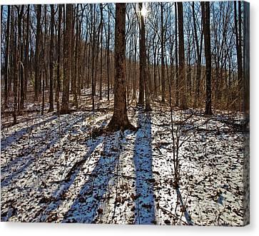 Trail In Winter Canvas Print by Susan Leggett