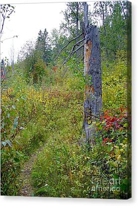 Canvas Print featuring the photograph Trail Sign by Jim Sauchyn