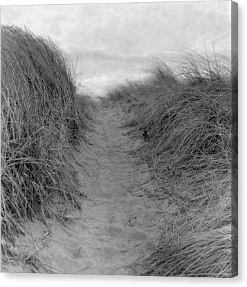 Trail Through The Sand Dunes Canvas Print by Daniel J. Grenier