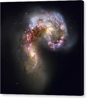 Trailing Streamers Of Gas And Stars Canvas Print by ESA and nASA