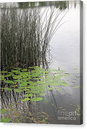 Tranquil Lillypads Of Spring Canvas Print by Michelle Bergersen