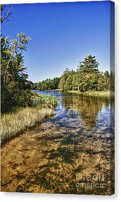 Tranquil Stream In Northern Michigan Canvas Print by Christopher Purcell