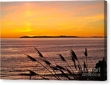 Tranquility  Canvas Print by Johanne Peale