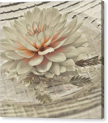 Peach Canvas Print - Tranquility by Trish Tritz