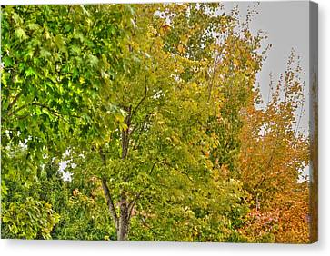 Canvas Print featuring the photograph Transition Of Autumn Color by Michael Frank Jr