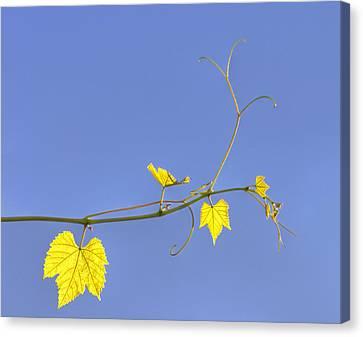 Translucent Canvas Print