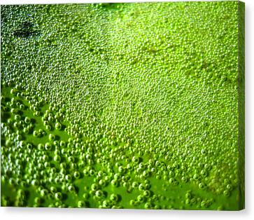 Trapped Air Bubbles Canvas Print by Catherine Natalia  Roche