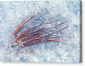 Trapped In Winter Canvas Print by Mike  Dawson