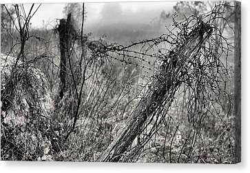 Trapped Canvas Print by JC Findley