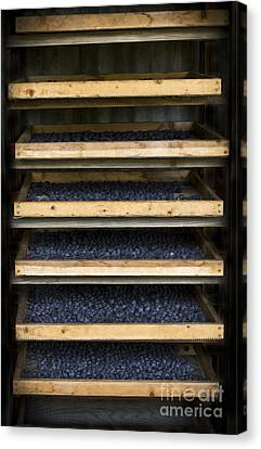 Rack Canvas Print - Trays Of Blueberries by Kim Henderson