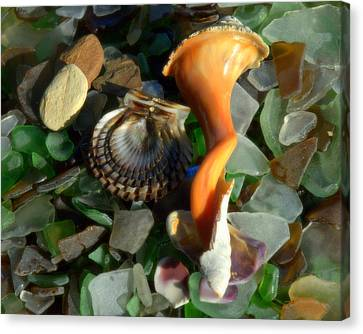 Treasures From The Sand Canvas Print