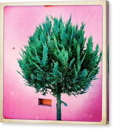 Tree And Colorful Pink Wall Canvas Print by Matthias Hauser
