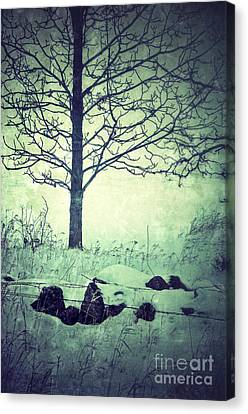 Tree And Fence In The Fog And Snow Canvas Print by Jill Battaglia