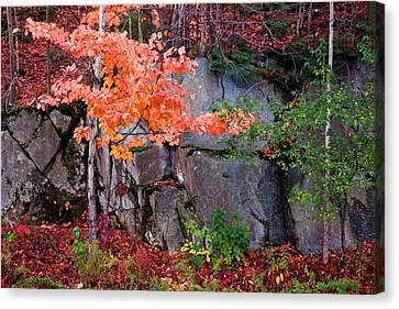 Tree And Rock Canvas Print by Tom Singleton