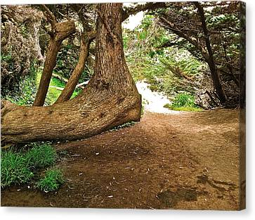 Tree And Trail Canvas Print by Bill Owen