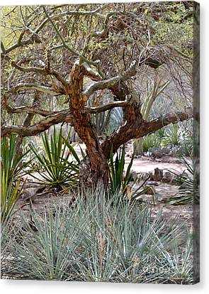 Tree And Yucca Canvas Print by Rebecca Margraf