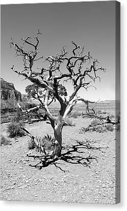 Tree At Cedar Ridge Bw Canvas Print by Julie Niemela