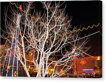 Tree At Manger Square In Bethlehem Canvas Print by Munir Alawi