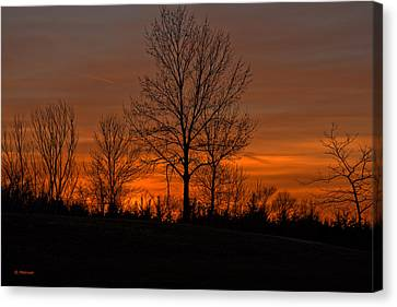 Tree At Sunset Canvas Print by Edward Peterson
