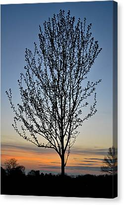 Tree At Sunset Canvas Print by Wayne King