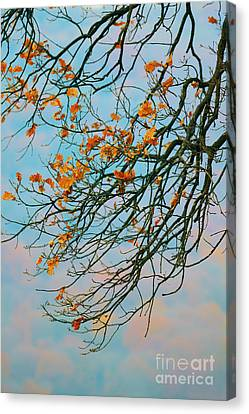 Tree Branches In Autumn Canvas Print by Gabriela Insuratelu