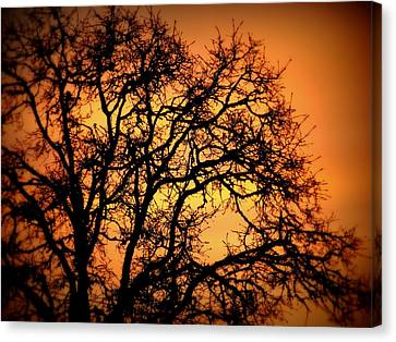 Tree Bursting With Setting Sun Canvas Print