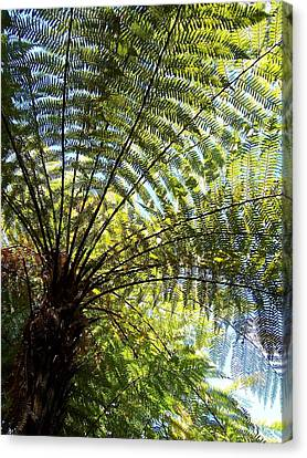 Tree Fern Canvas Print by Peter Mooyman