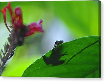 Canvas Print featuring the photograph Tree Frog Peeking Over Leaf by Jodi Terracina