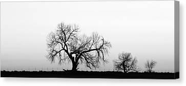 Tree Harmony Black And White Canvas Print by James BO  Insogna