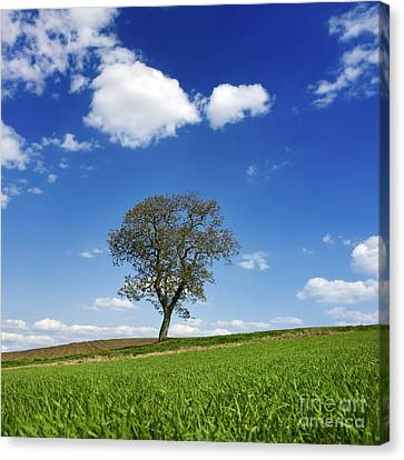 Tree In A French Landscape Canvas Print by Bernard Jaubert