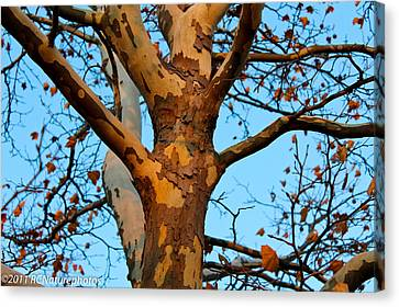 Canvas Print featuring the photograph Tree In Camo by Rachel Cohen