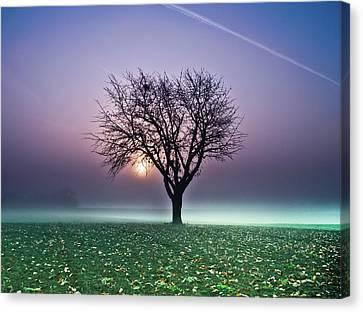Tree In Field Canvas Print by Ulrich Mueller