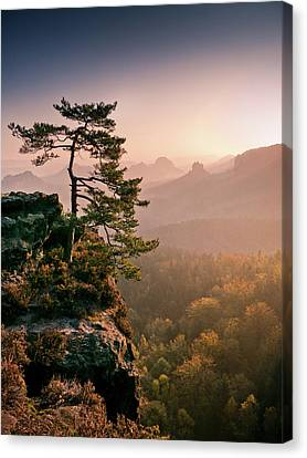 Tree In Morning Llght In Saxon Switzerland Canvas Print by Andreas Wonisch