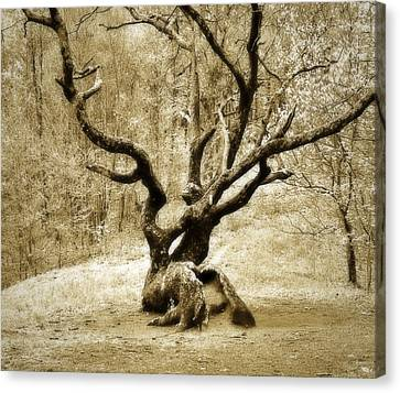 Tree In The Forest Canvas Print by Susan Leggett