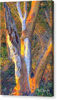 Tree In The Sunset Canvas Print by Randall Thomas Stone