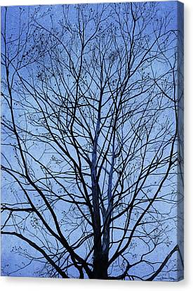 Tree In Winter Canvas Print by Andrew King
