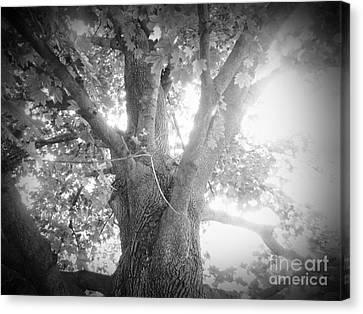 Tree Canvas Print by Jeremy Wells