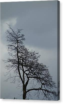 Canvas Print featuring the photograph Tree by Jerry Cahill