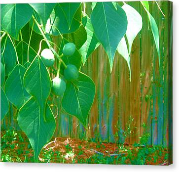 Tree Leaves Canvas Print by Juliana  Blessington