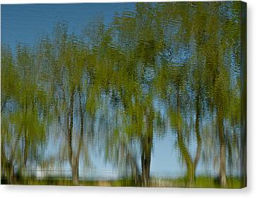 Tree Line Reflections Canvas Print by Colleen Coccia