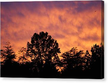 Tree Lined Skies Canvas Print by Maria  Wall